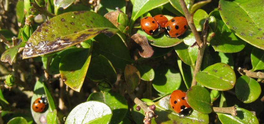 Where do Ladybirds go in spring?